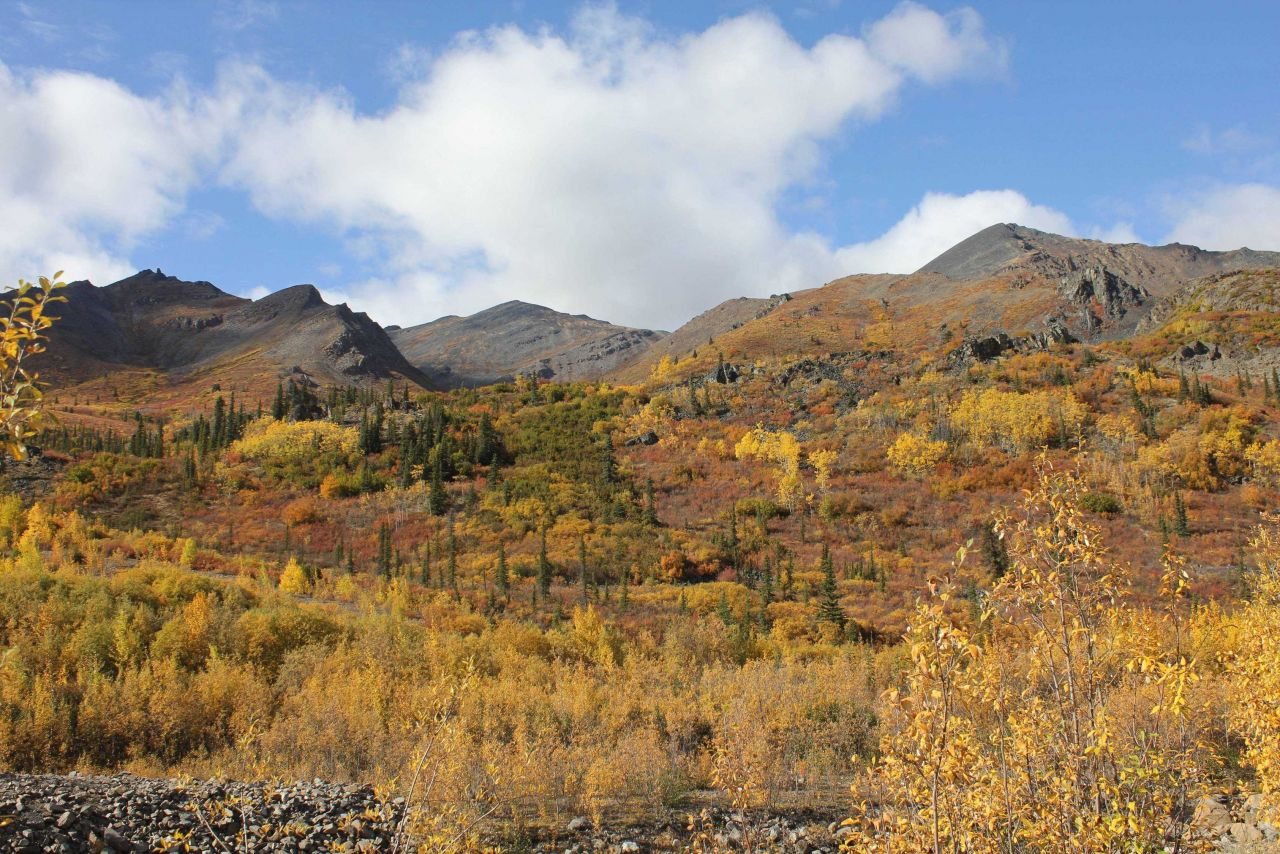 Willows, cottonwood, aspen and spruce in autumn along the Dempster Highway in the Ogilvie Mountains. Photo