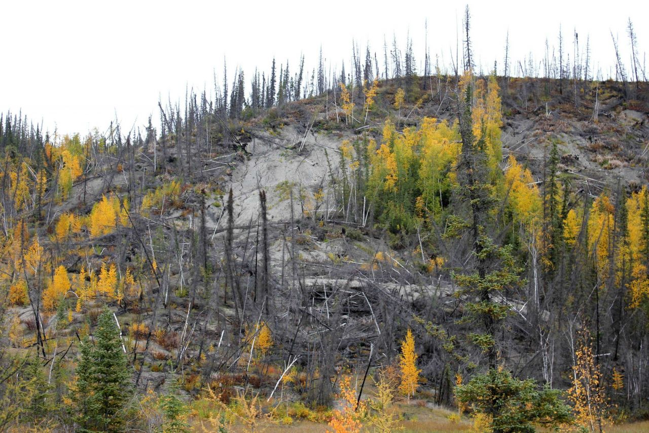 Combination of forest fire and melting permafrost causing radical changes to local ecology Photo
