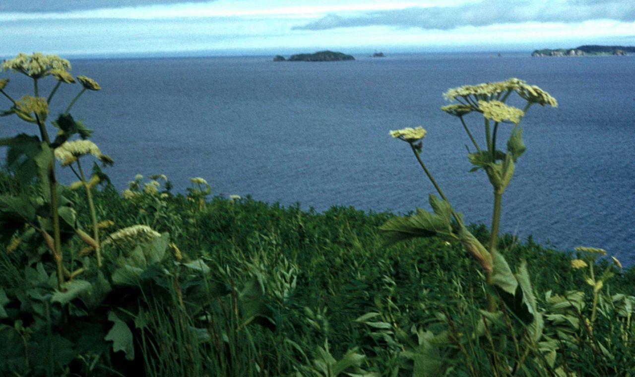Coastal scene with wildflowers on Kodiak Island Photo