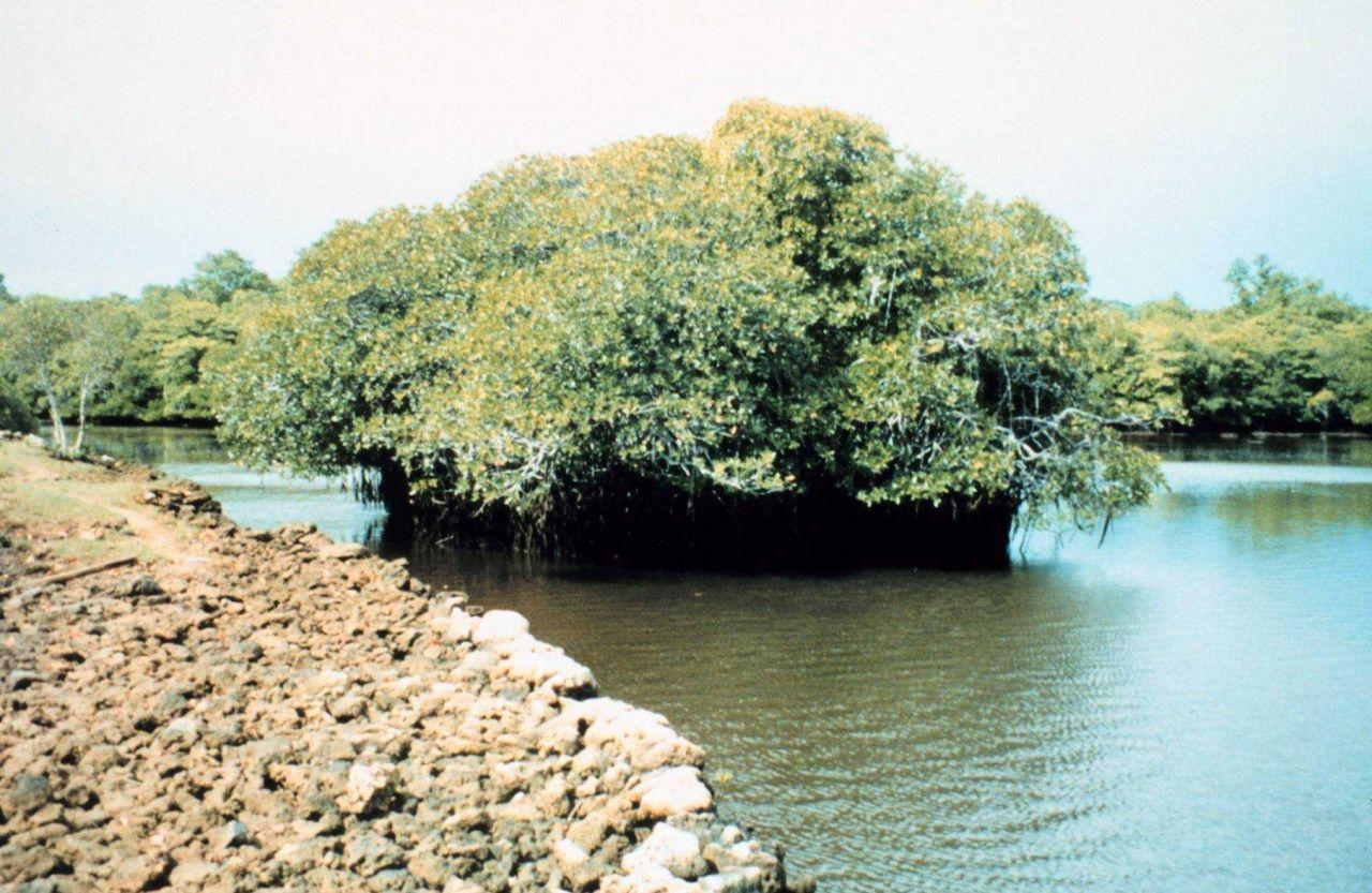 Coral rock islets and mangrove shoreline Photo