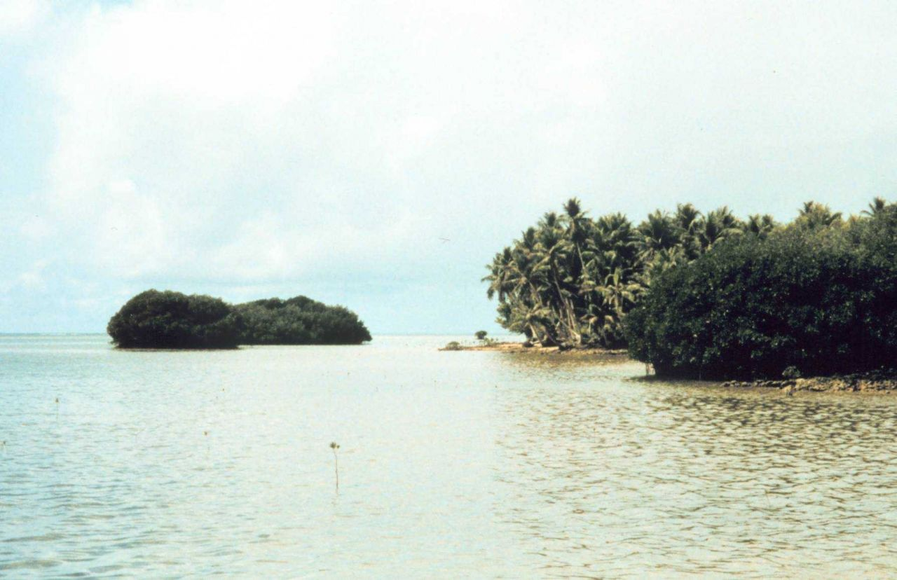 Mangroves and palm trees on coral rock shoreline Photo