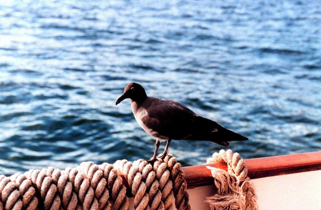 A bird in Fernandina Island, Galapagos Islands Photo