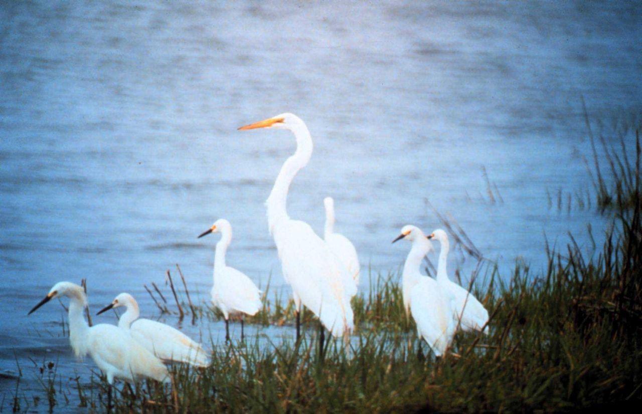 North Carolina National Estuarine Research Reserve Photo