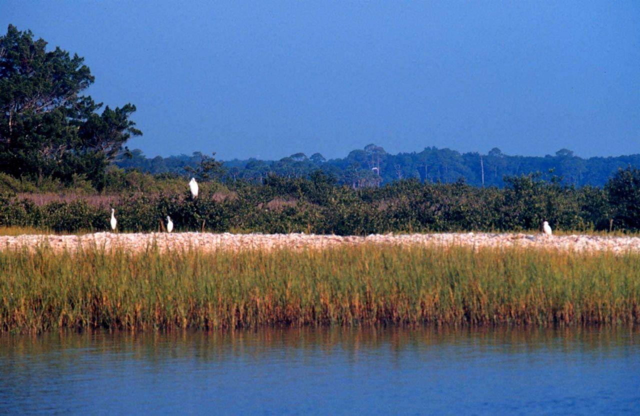 Guana Tolomato Matanzas National Estuarine Research Reserve. Photo