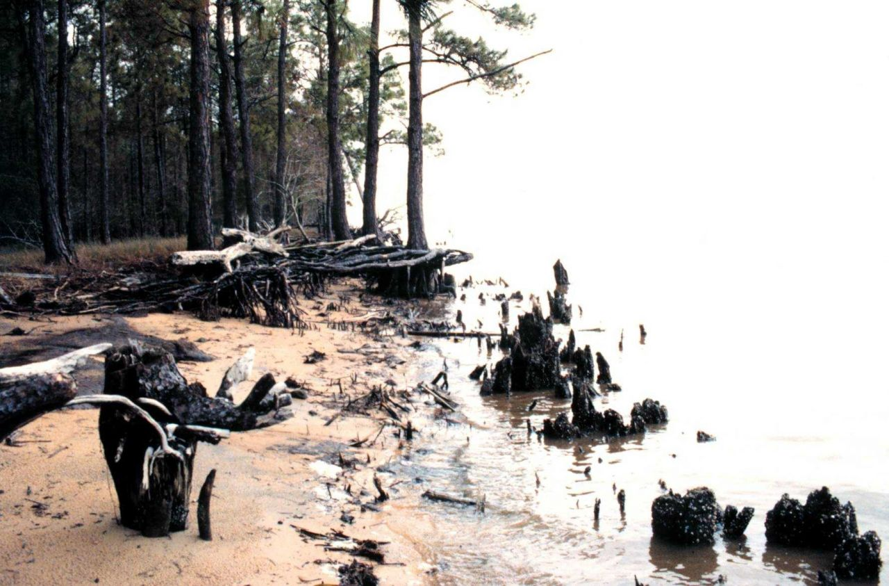 Weeks Bay National Estuarine Research Reserve Photo