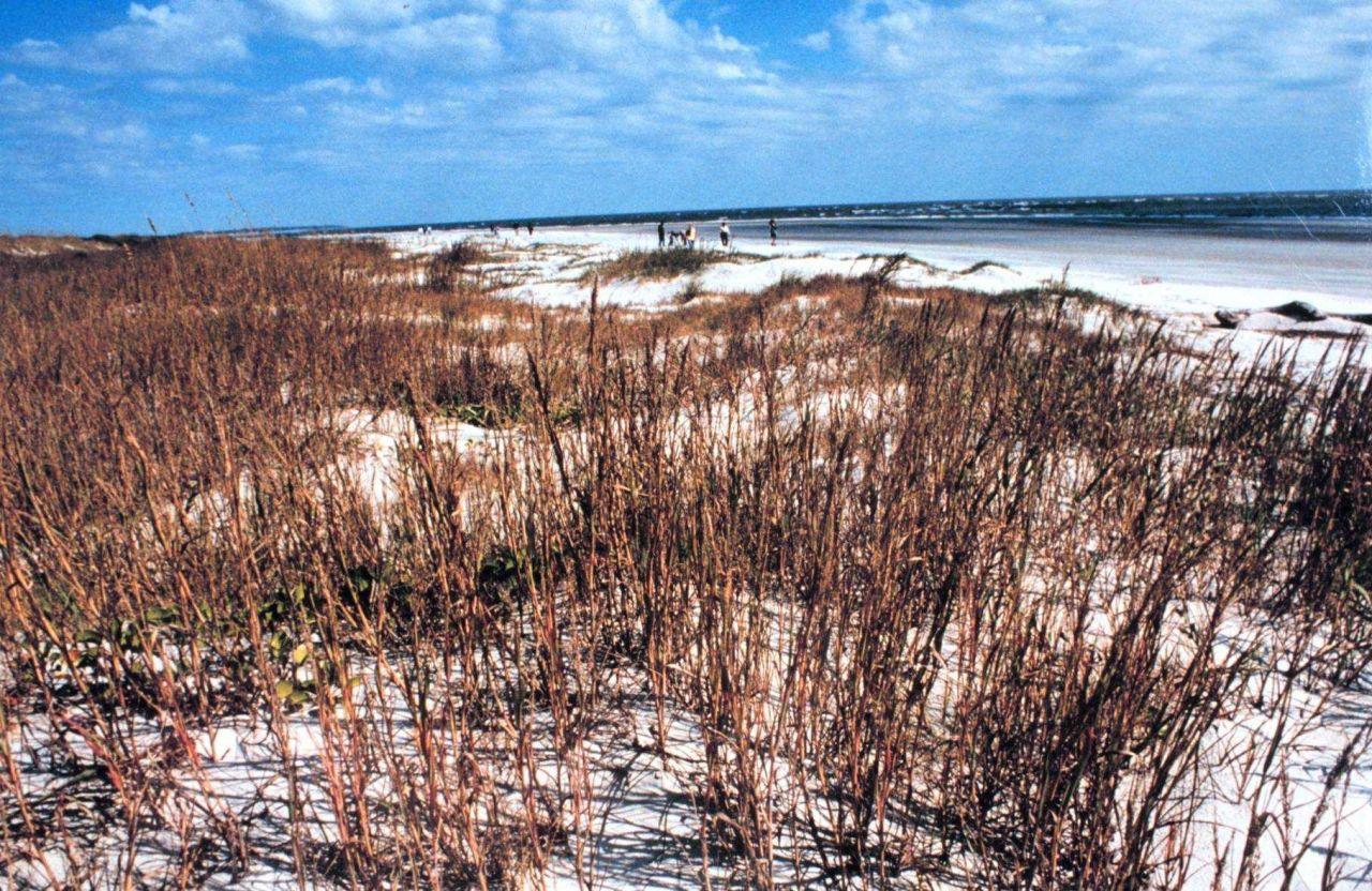 Sapelo Island National Estuarine Research Reserve Photo