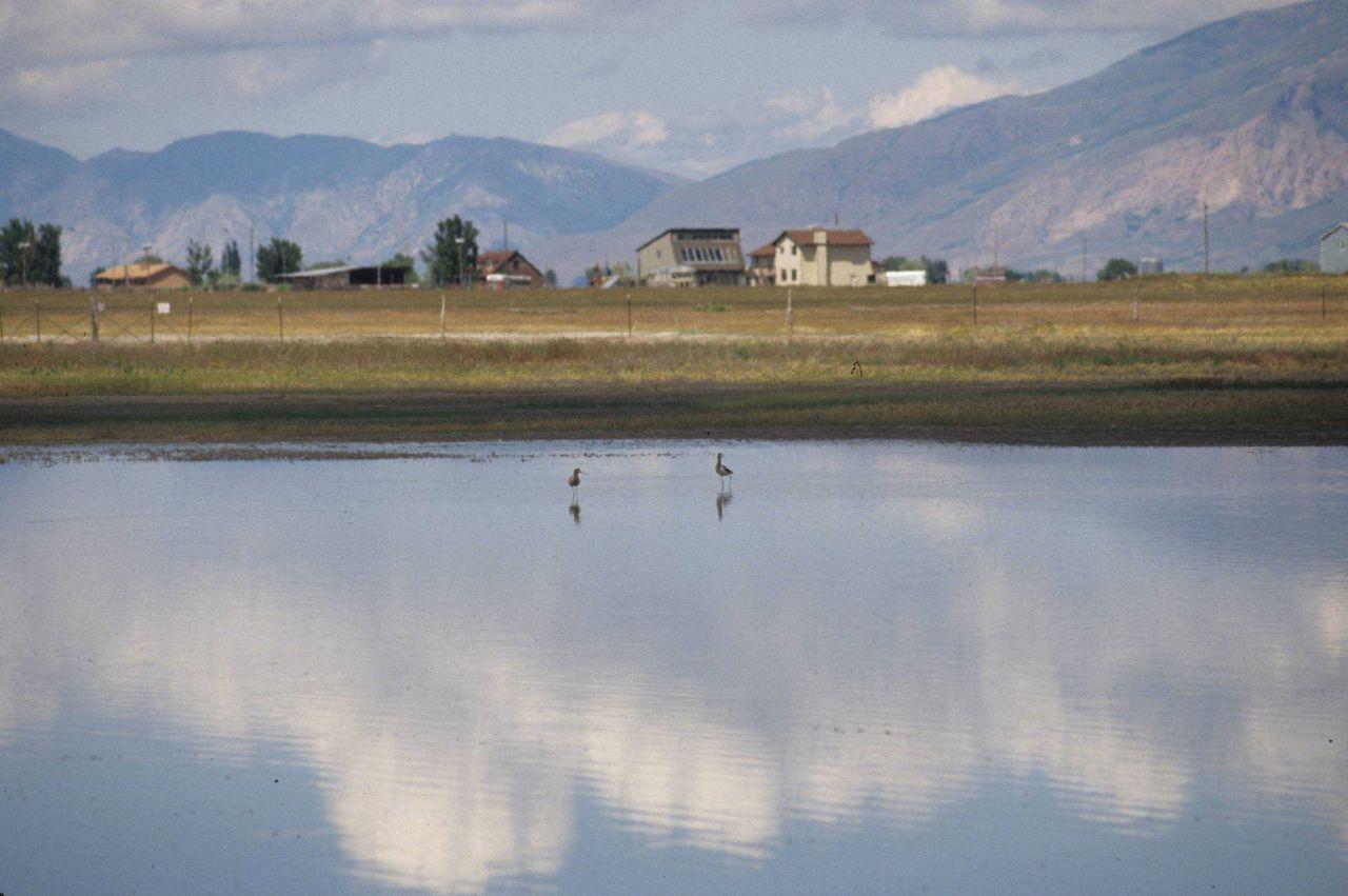 Two Shore Birds at Bear River Wildlife Refuge, Utah Photo