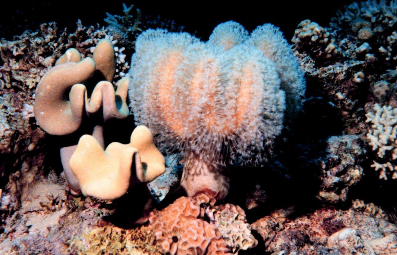 Coral with polyps extended. Photo