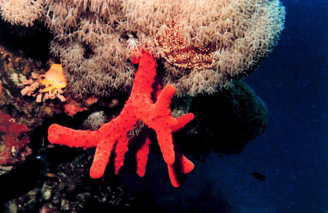 Red sponge ? Photo