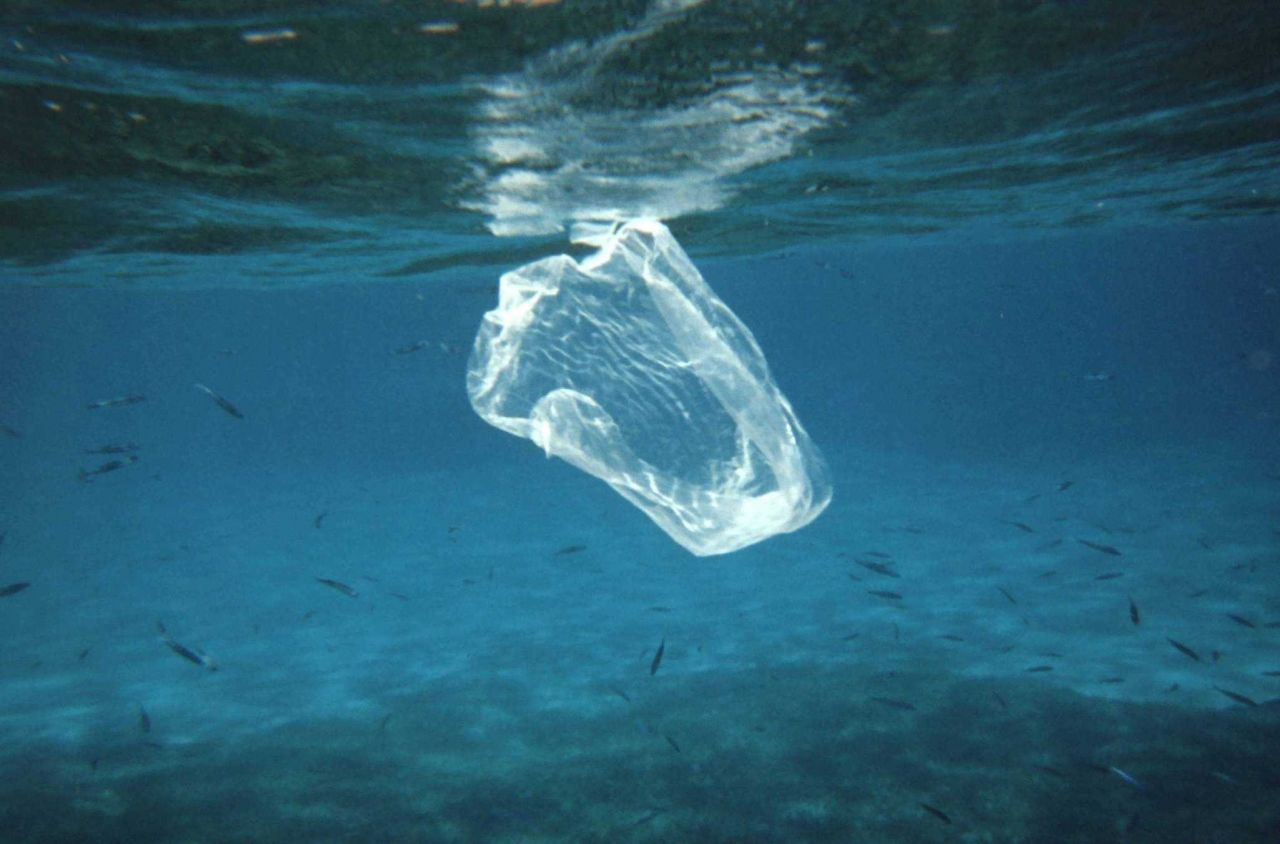 Plastic sandwich baggy floating in the water column Photo