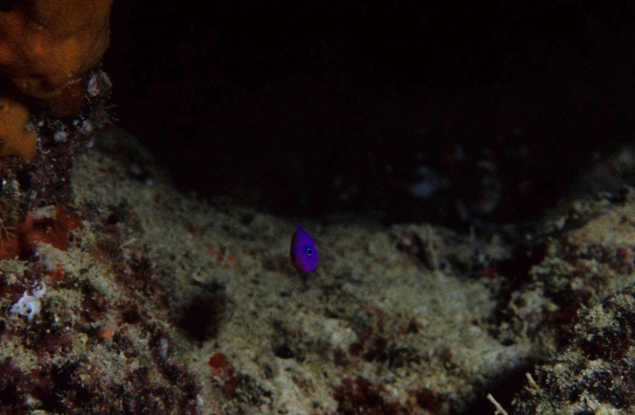 One Tree Reef Photo