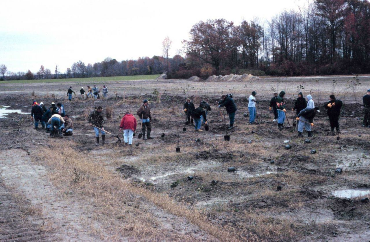Volunteers in the emergent wetland, vegetation in the flood plain. Photo