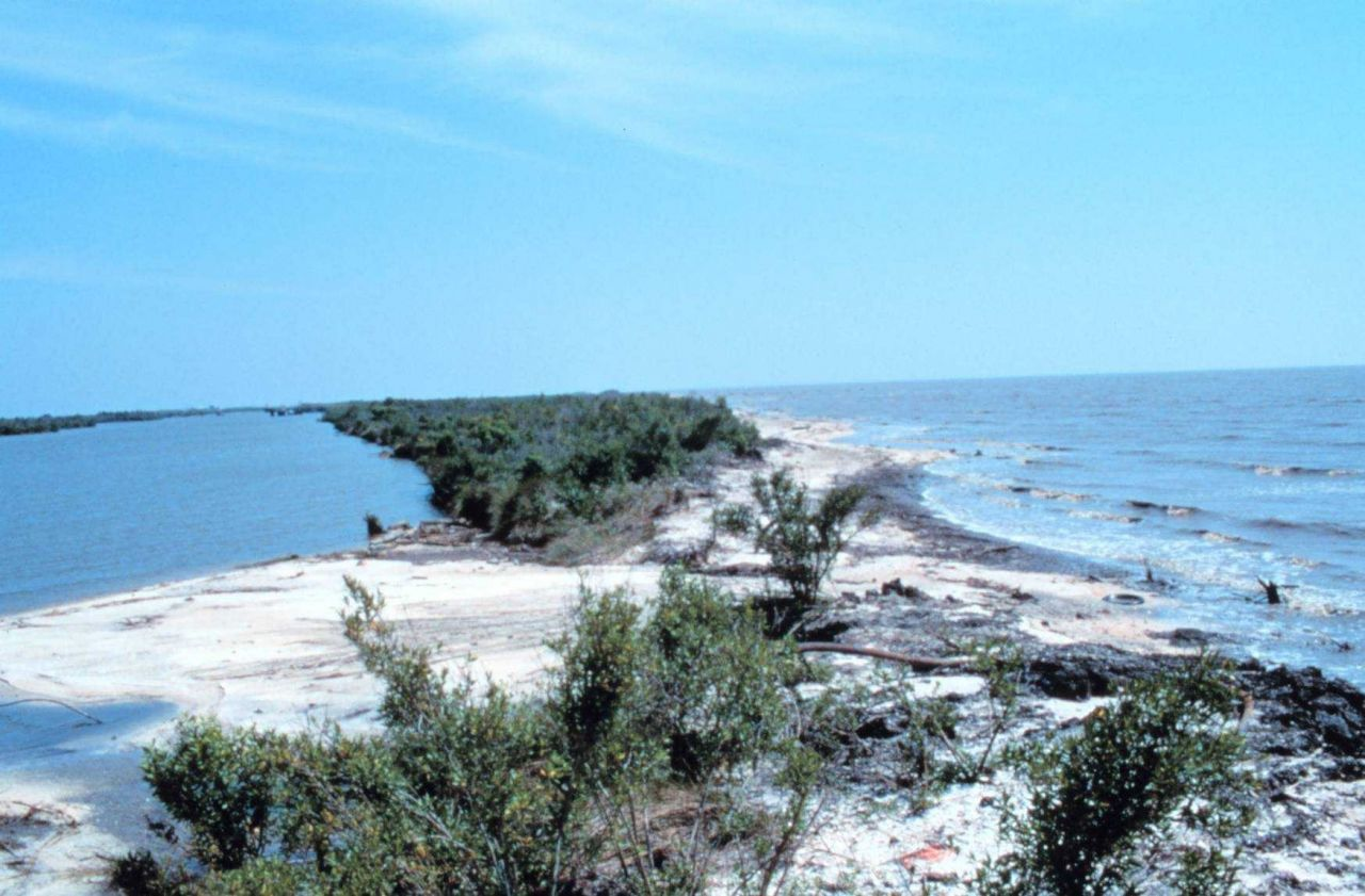 Area 1; a southeast view of the narrowest section of beach that shows evidence of overwashing. Photo