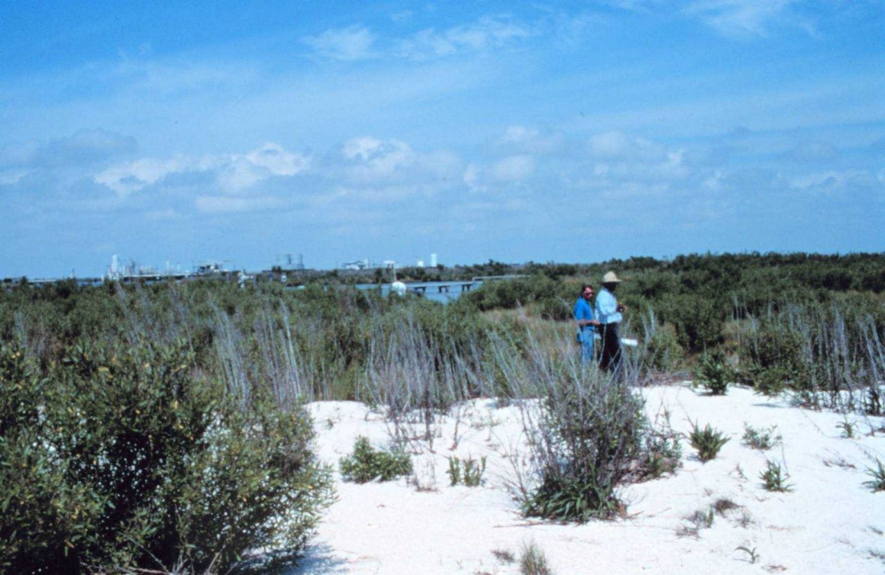 Southeast of area 1; a north northeast view from the beach towards Mobile Canal showing part of the Mobile Oil facility in the background. Photo