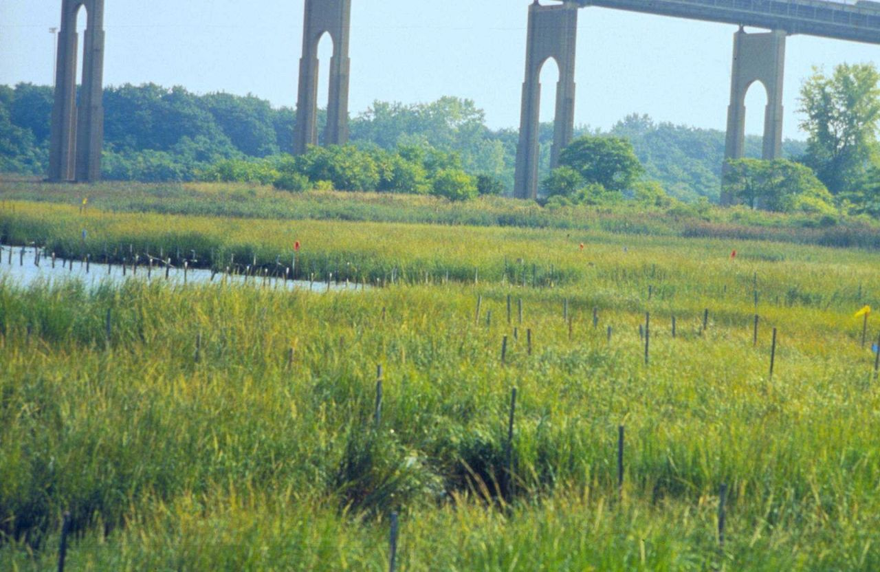 Grasses near Arthur Kill Waterway, Richmond County Photo