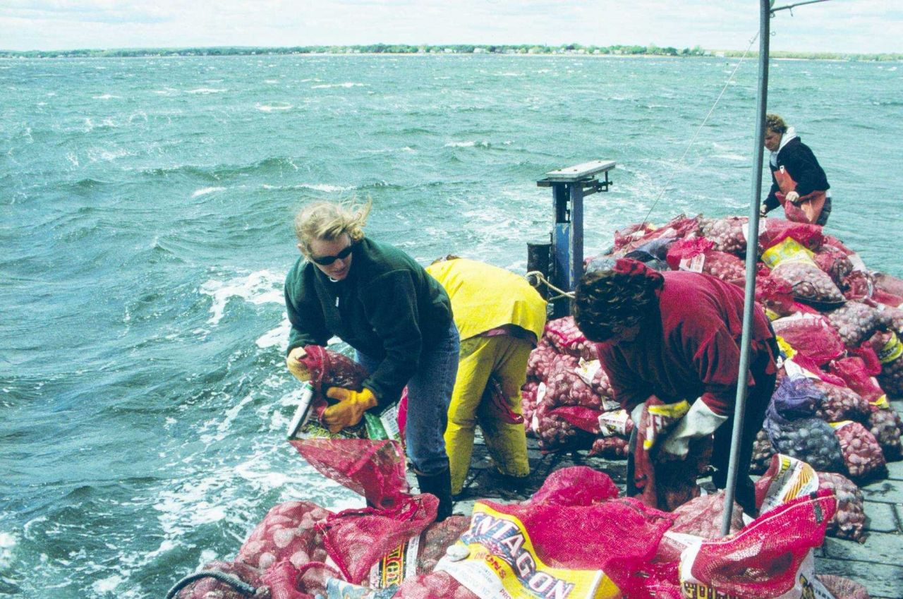A DEM worker unloads quahogs into the rough waters, in early spring, outside Greenwich Bay. Photo