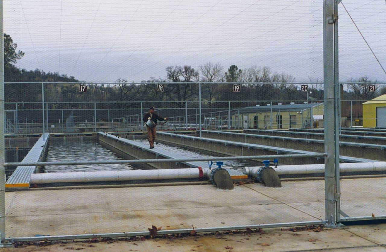 Coleman National Fish Hatchery, the raceways for rearing young salmon. Photo
