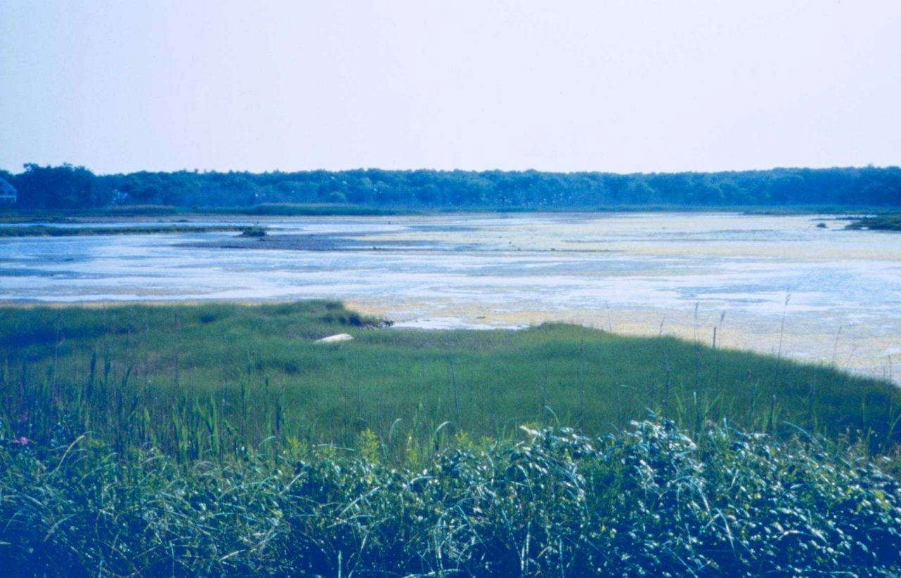 Nonquit marsh, a tidally restricted marsh and one of the projects selected for restoration during Round 2 Photo