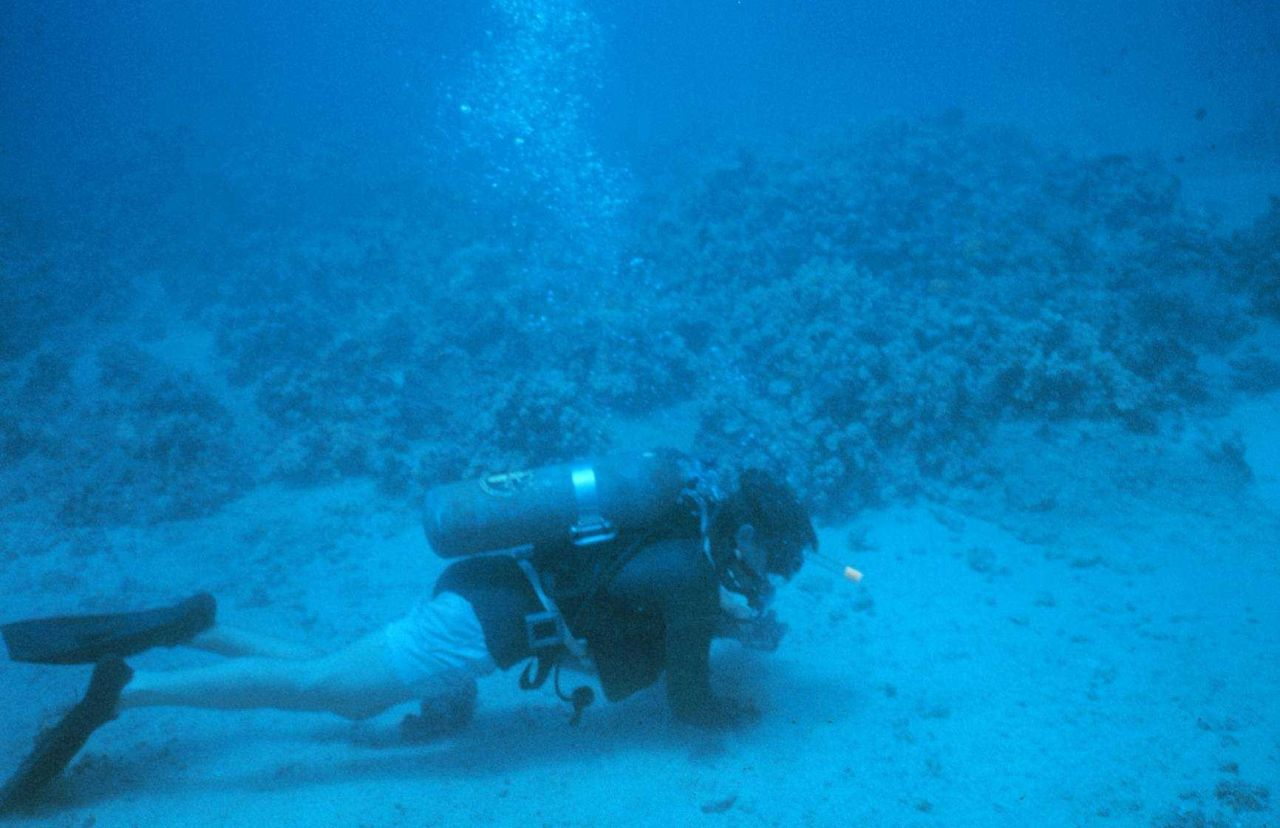 Benthic samples were taken to identify the species associated with the artificial reef site. Photo