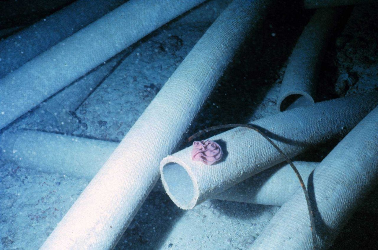 Night time photo of nudibranch egg mass placed on the pipe surfaces within days of placement. Photo