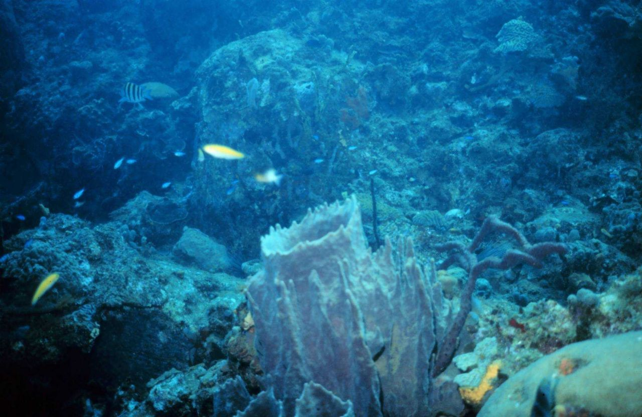 Reef scene with large barrel sponge in foreground. Photo