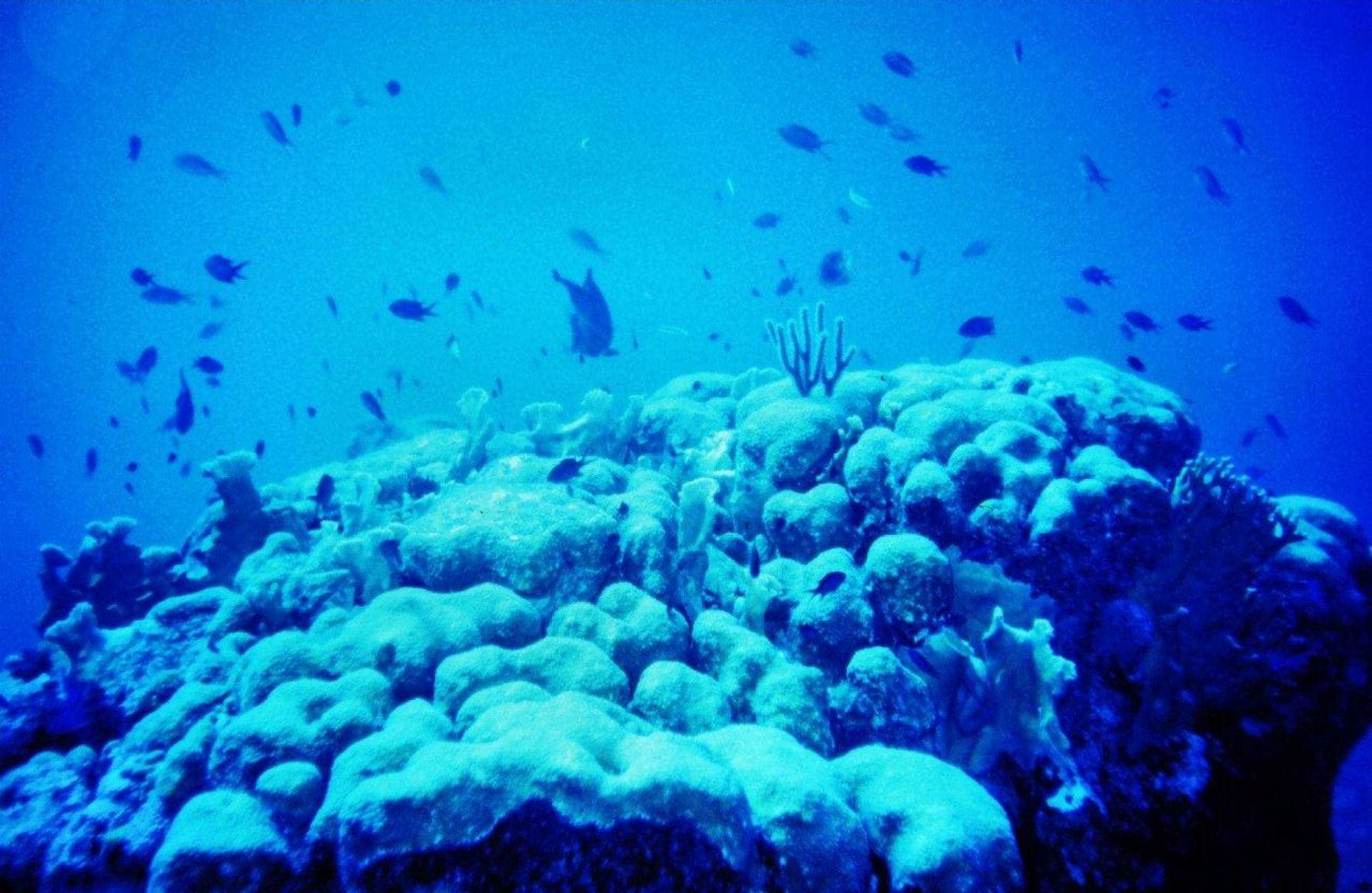 A melange of small reef fishes Photo