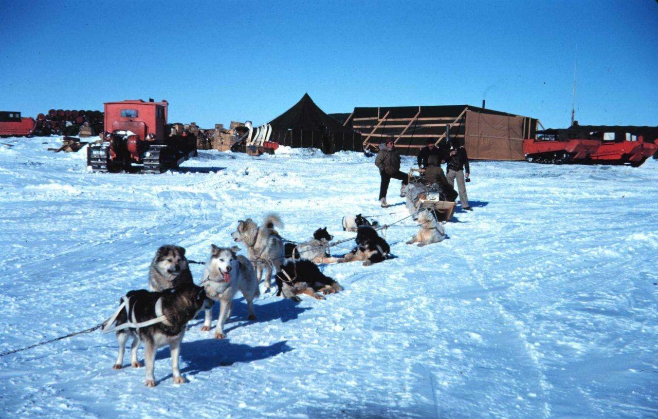 A fine team of sled dogs at Tigvariak Island Photo