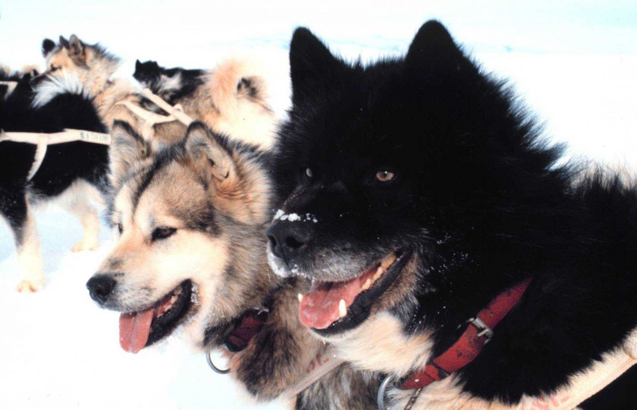 What beautiful dogs! Photo