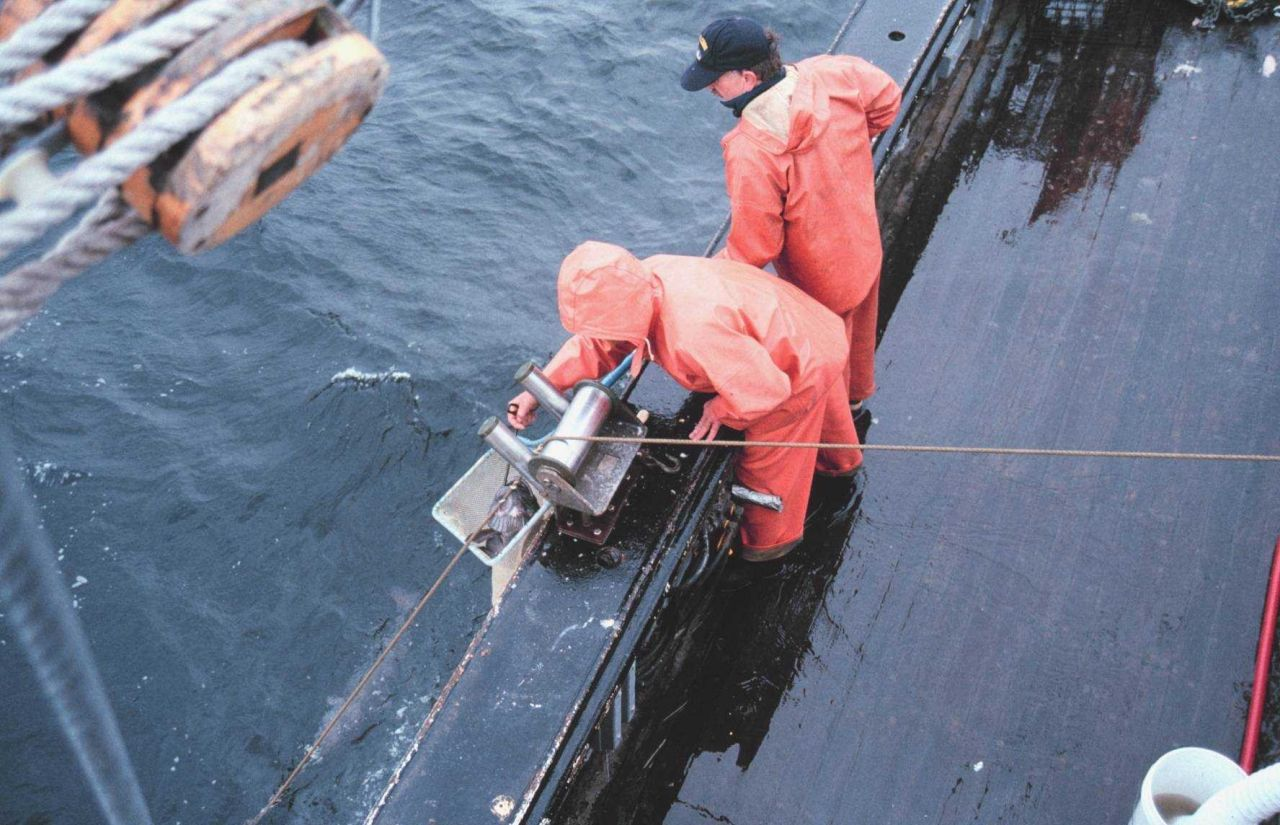 Hauling longline - netting a sablefish - note large fish in water Photo