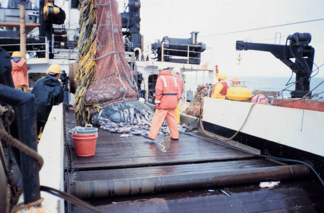 Emptying cod end of trawl on deck to ready catch for sorting and sampling. Photo