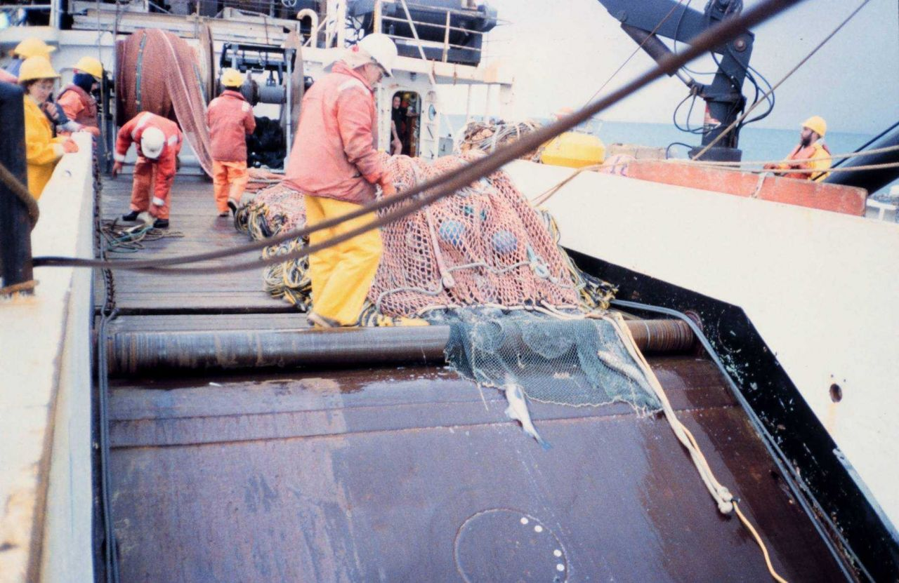 Cod end of net on deck after trawl. Photo