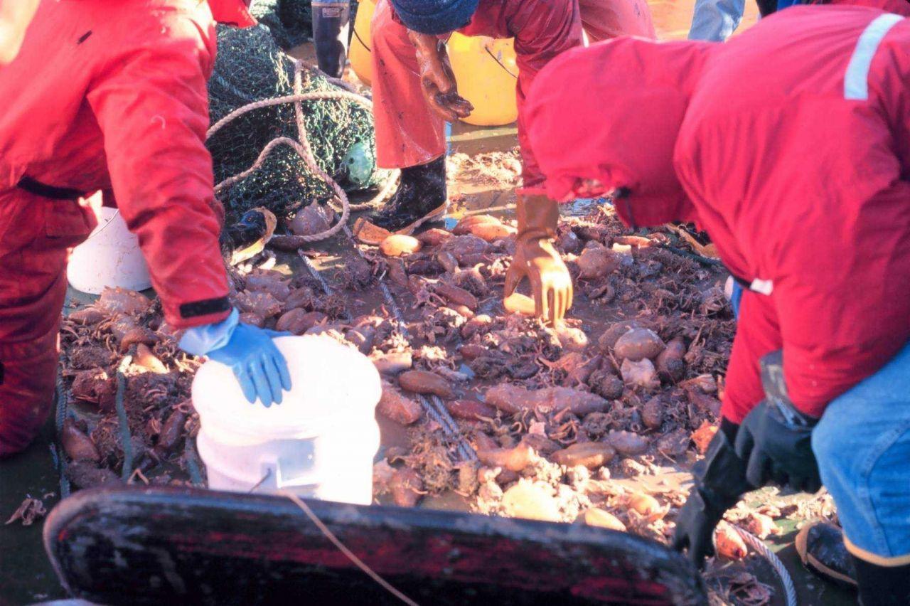 Spoils of net trawl Photo