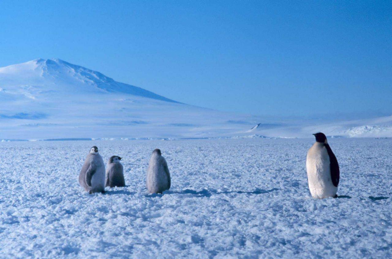 Emperor penguin colony at Cape Washington in the Ross Sea Photo