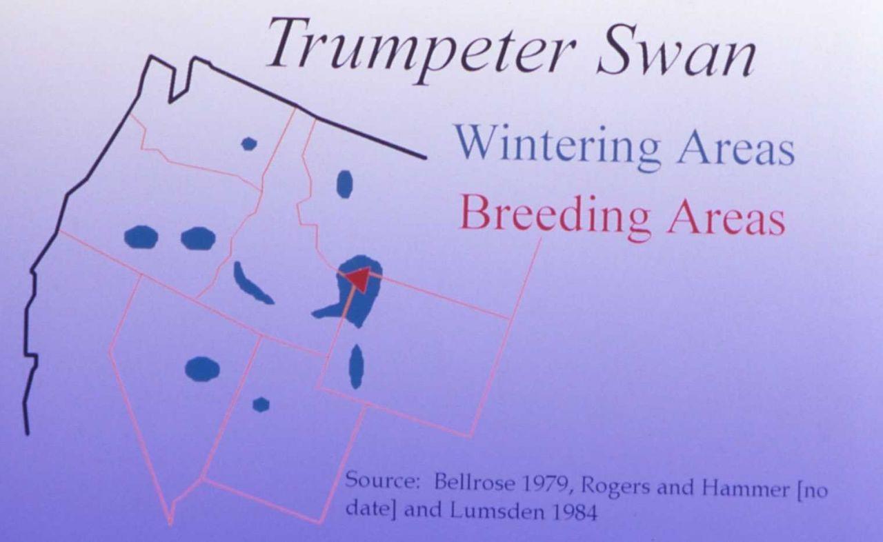 Trumpeter swan wintering/breeding areas map Photo