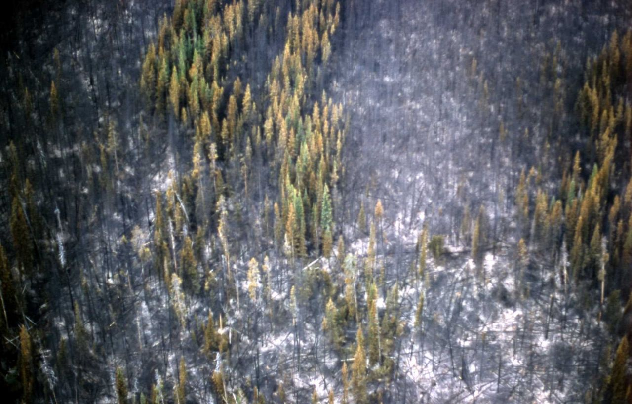 Aerial view of the Willow Creek fire Photo