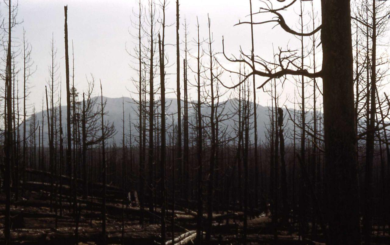 Lewis Lake fire Photo