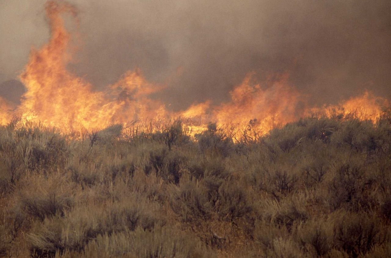 Close up of sage (gound) fire at Africa Lake Photo
