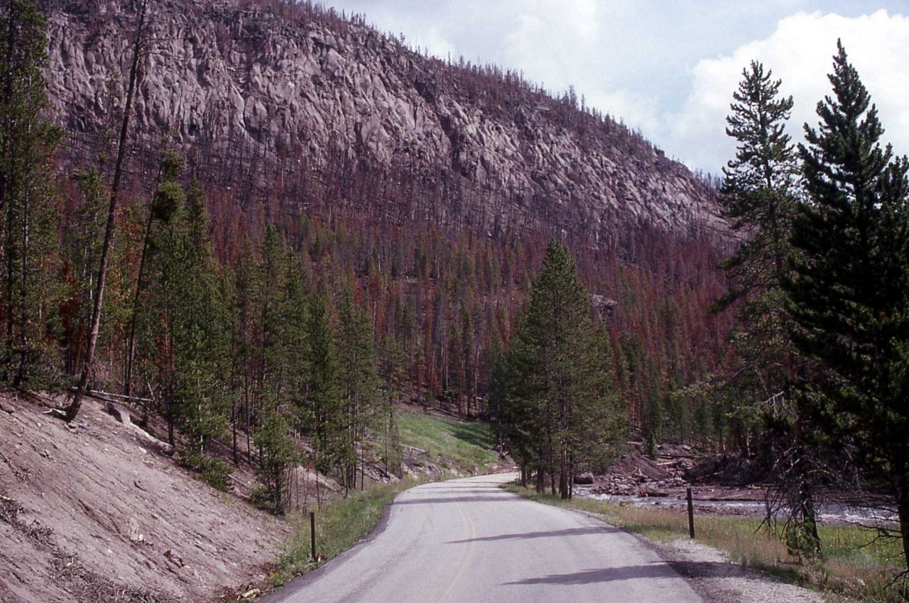 Mudslide caused by heavy rain in Gibbon Canyon - Erosion/Geology Photo