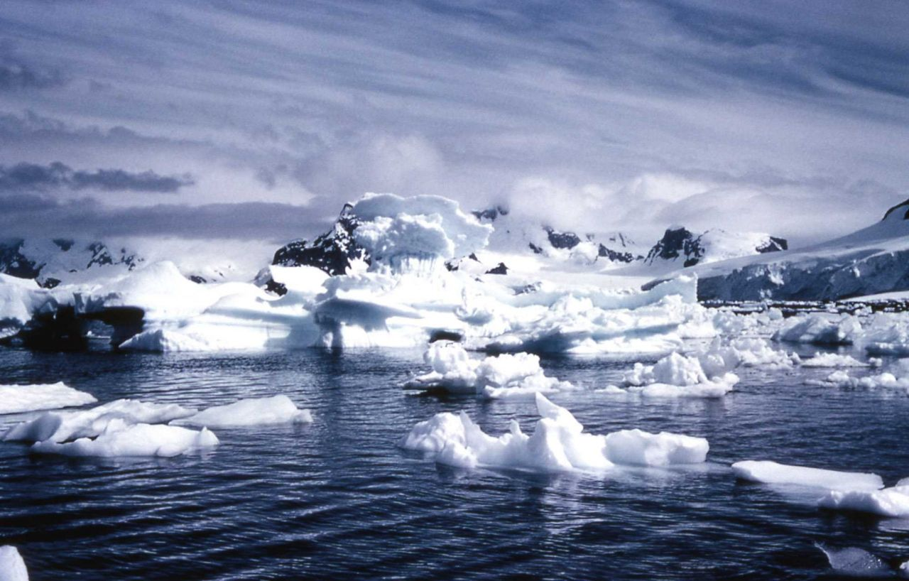 Icebergs floating in Paradise Harbor, Antarctica, with mountains beyond - Geology - Glacial Photo