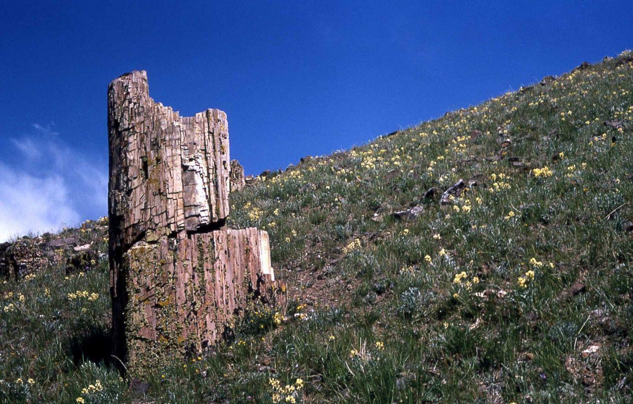Specimen Ridge Photo
