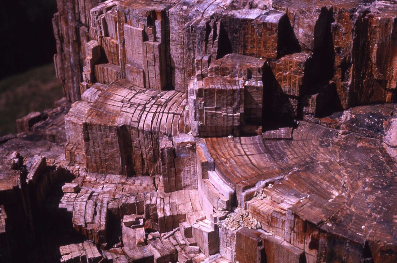 Highly fractured petrified stump showing annual rings Photo