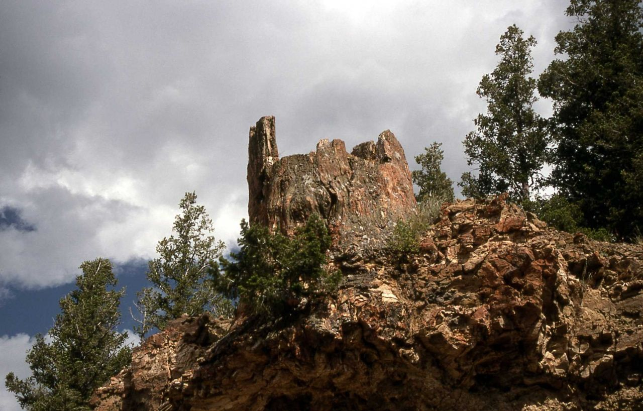Petrified trees, Specimen Ridge Photo