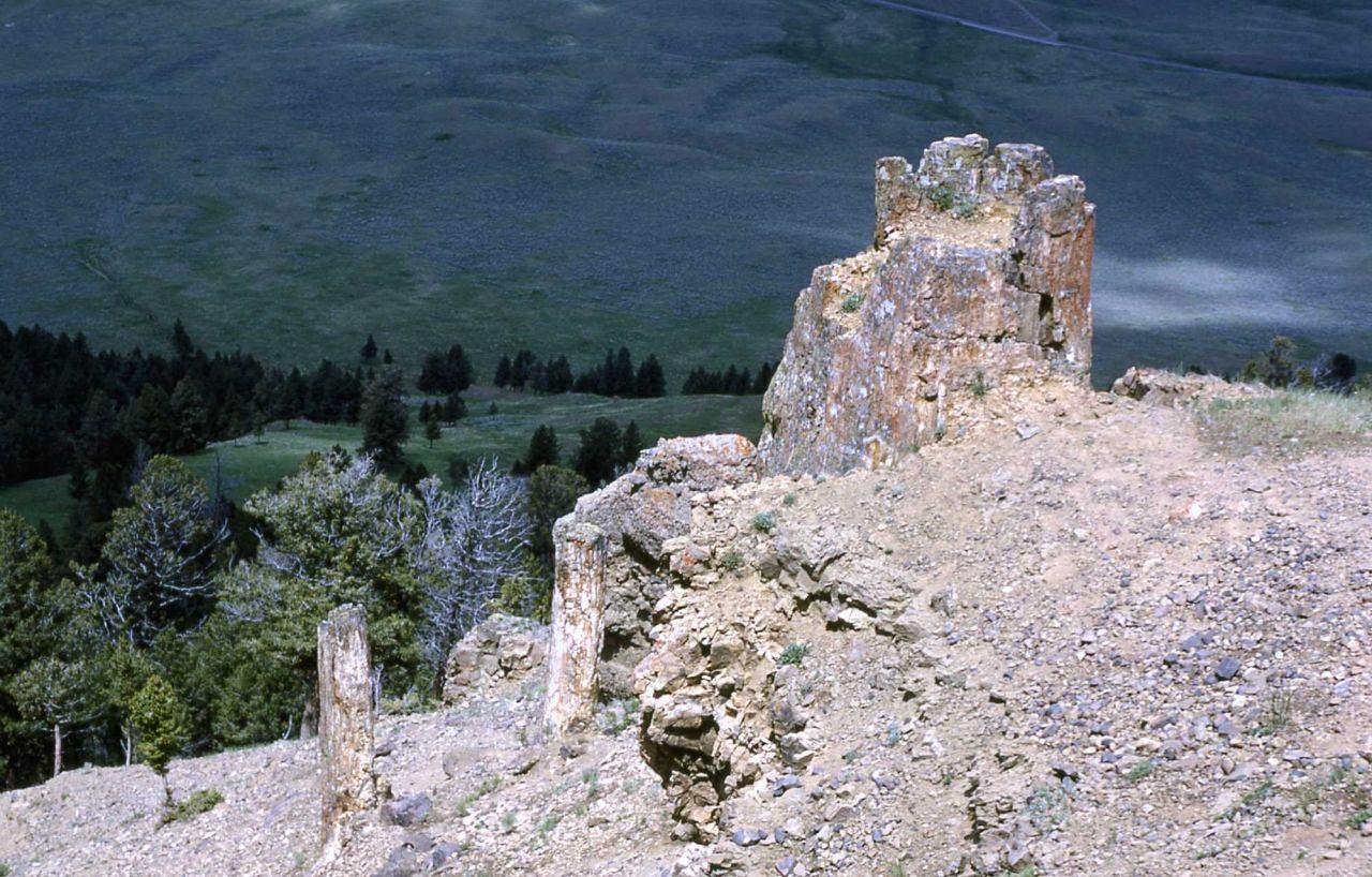 Petrified trees on Specimen Ridge Photo