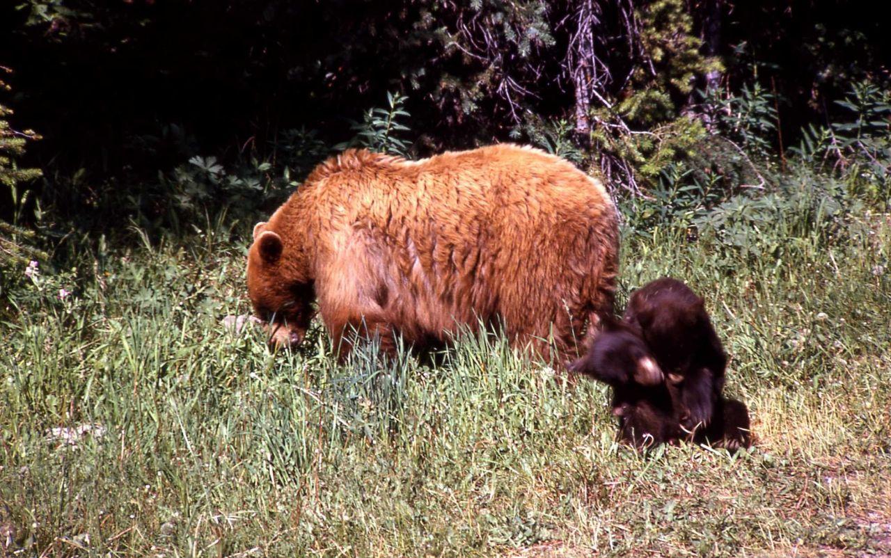 Black bear & cub Photo