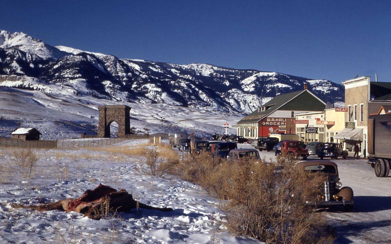 Elk kill - streets of Gardiner, Montana Photo