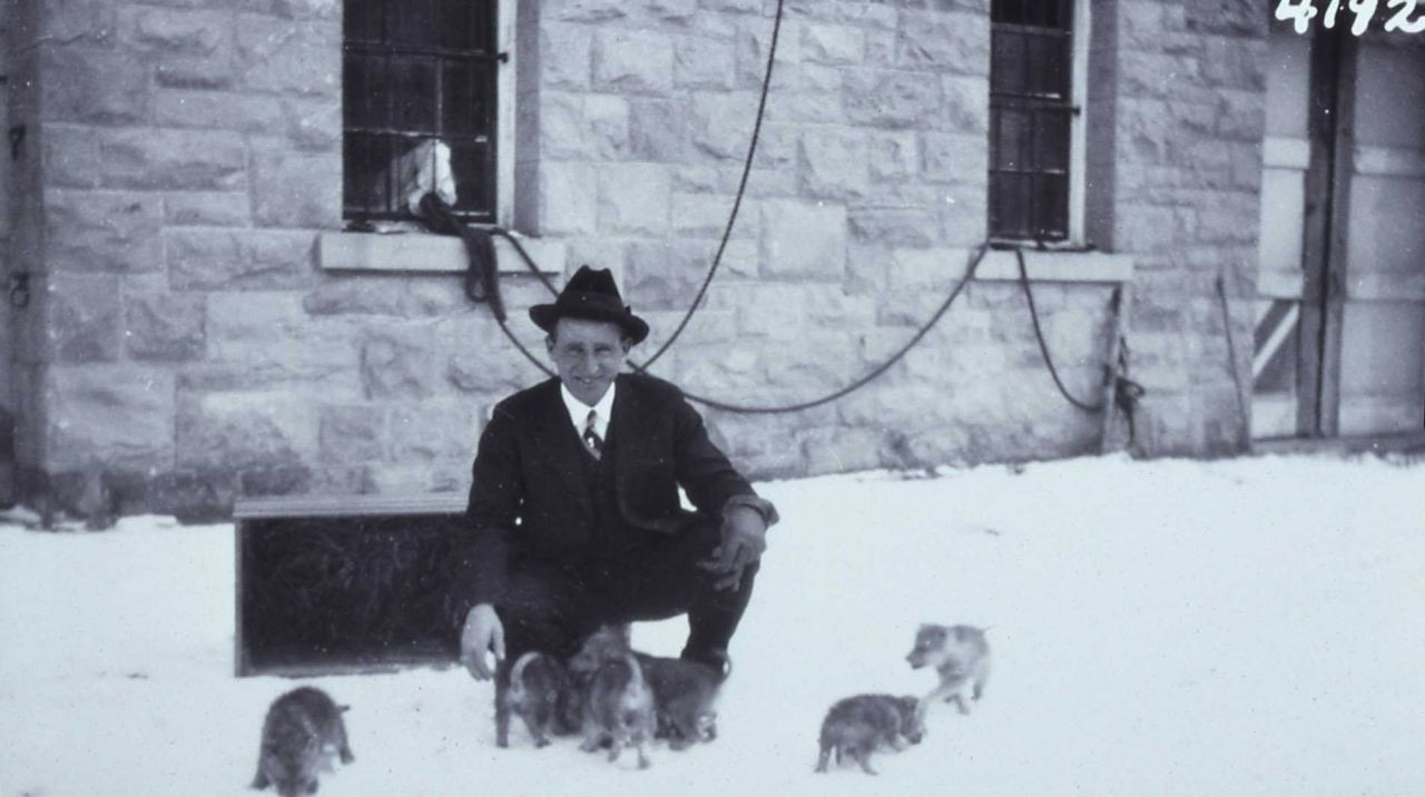 Chief Ranger Sam Woodring with six of the ten wolf pups described in the 1922 Superintendent Report Photo
