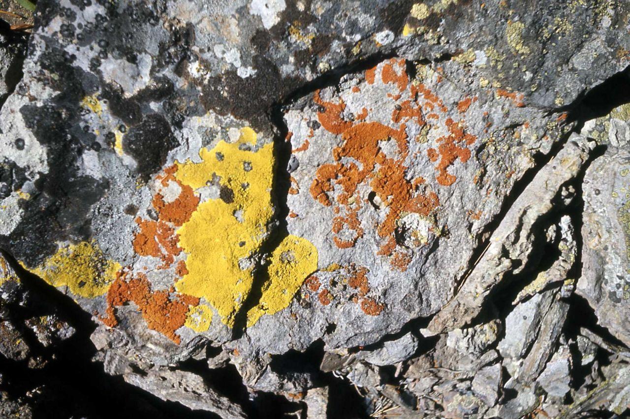 Lichen at Obsidian Cliff Photo