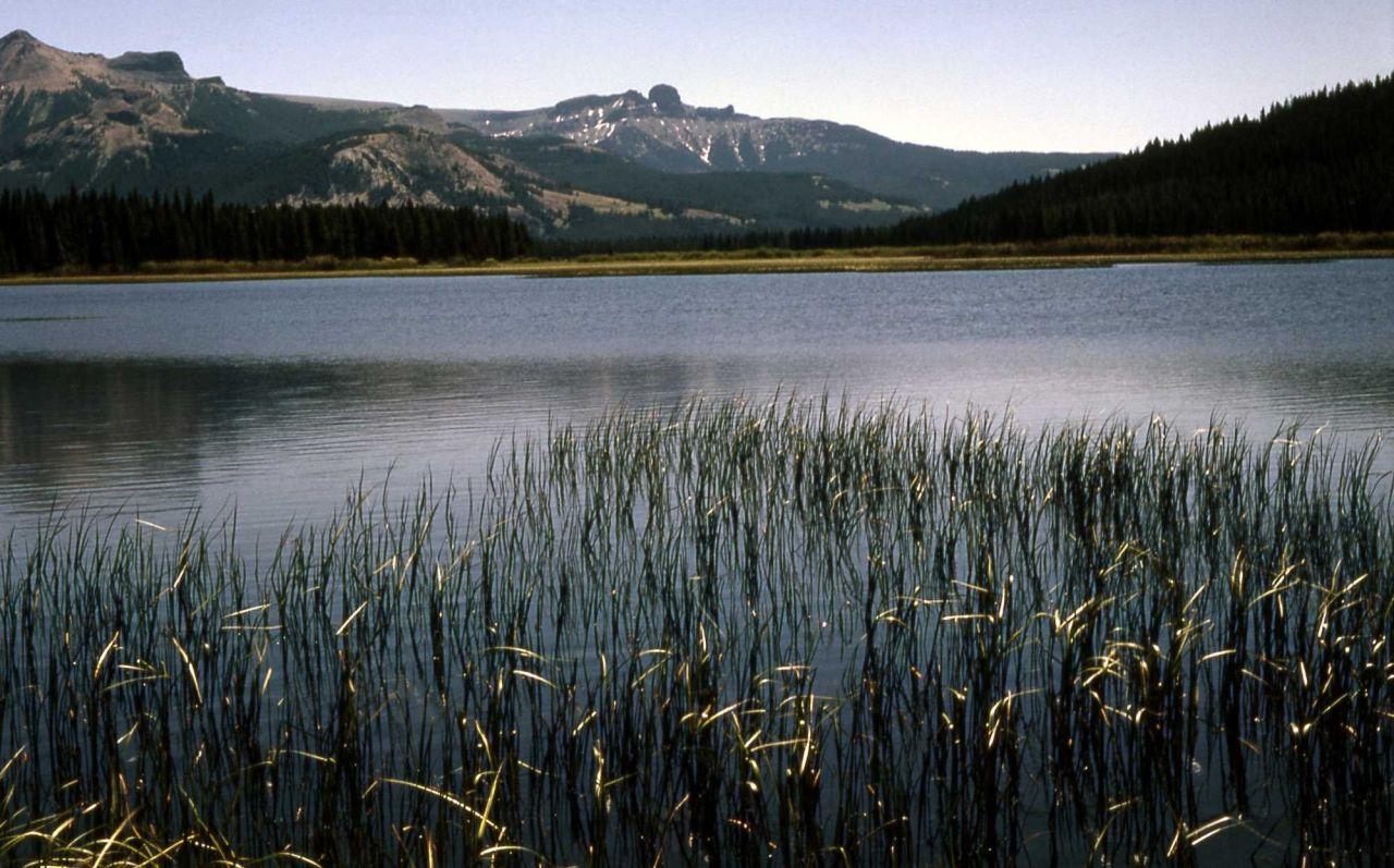 Pond succession, sedge zone Photo