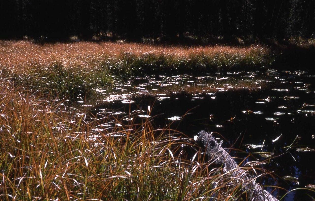 Pond & marsh habitat Photo