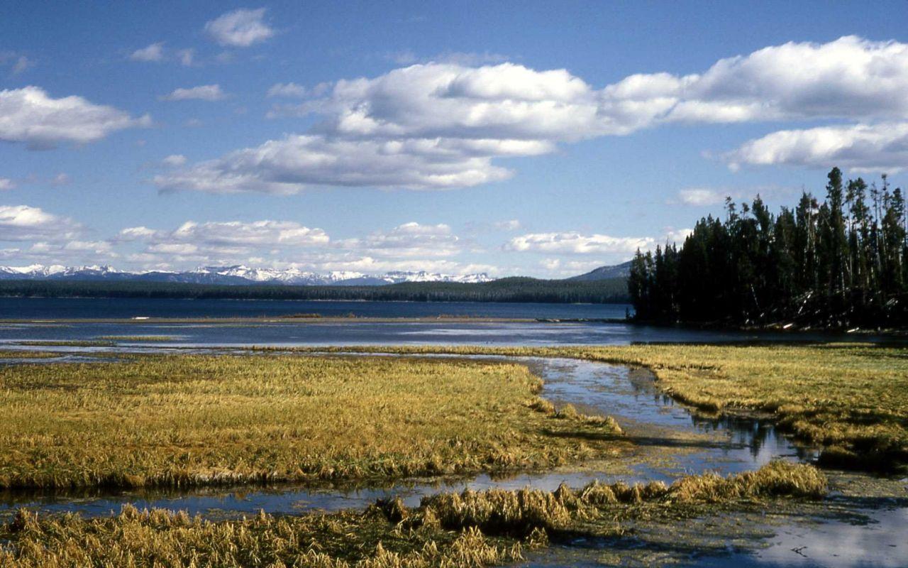 Wetland habitat at the mouth of Thumb Creek Photo